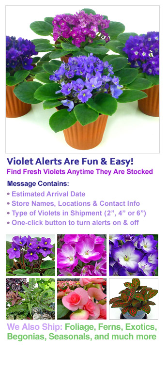 Fresh African Violet Notifications