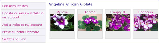 Save a Profile for your Violet
