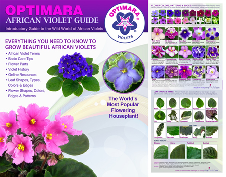 Basic Guide To African Violets